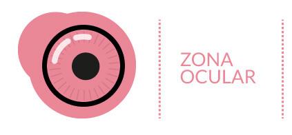 Partes Internas del Ojo: Zona Ocular