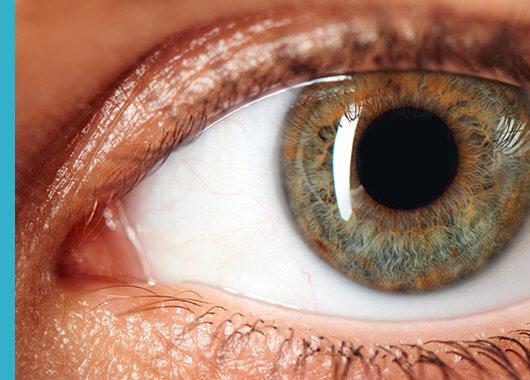 Por que tenemos ojos de color verde, azul o marrón